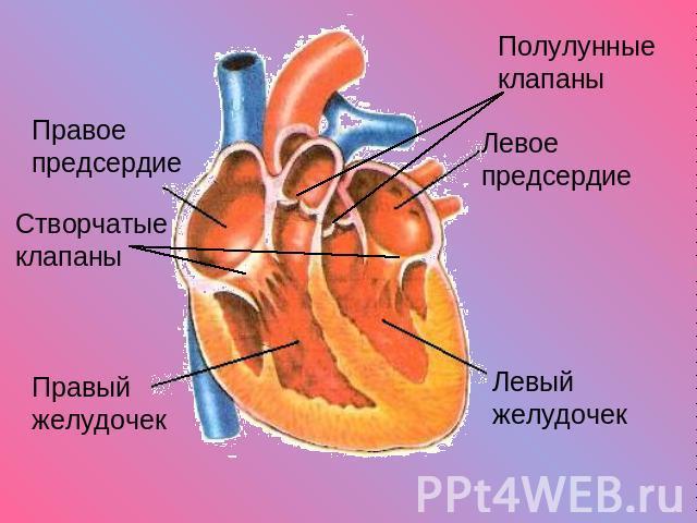 Клапан Полулунный