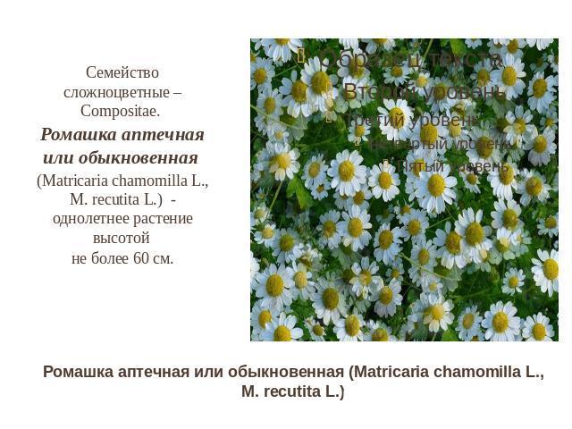 3 кл окр мир разнообразие растенийdocx конспект разнообразие растений)