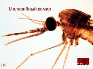 доклад на тему паразиты человека