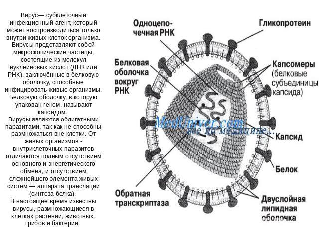 вирусы паразиты клеток человека