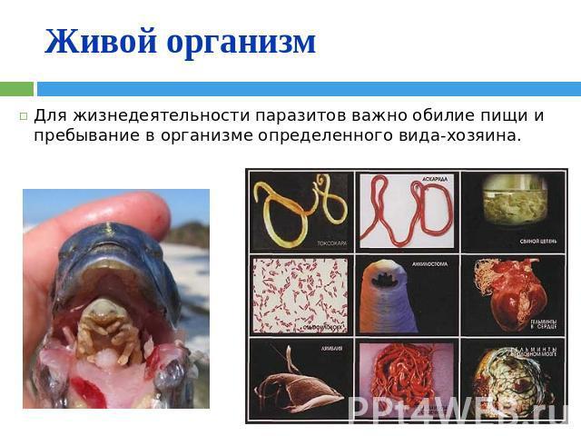 влияние паразитов на поведение человека