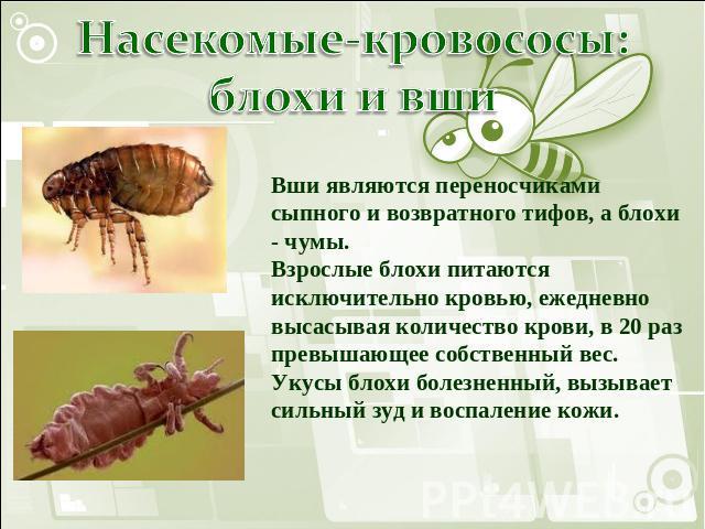 африканские паразиты в организме человека видео