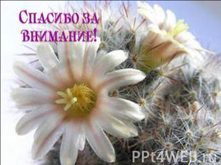 Что сделать чтобы зацвл кактус TopAuthor.ru. зацвел сделать чтобы кактус как так.