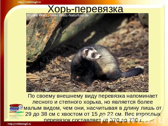 Презентация На Тему Танки России Скачать Бесплатно
