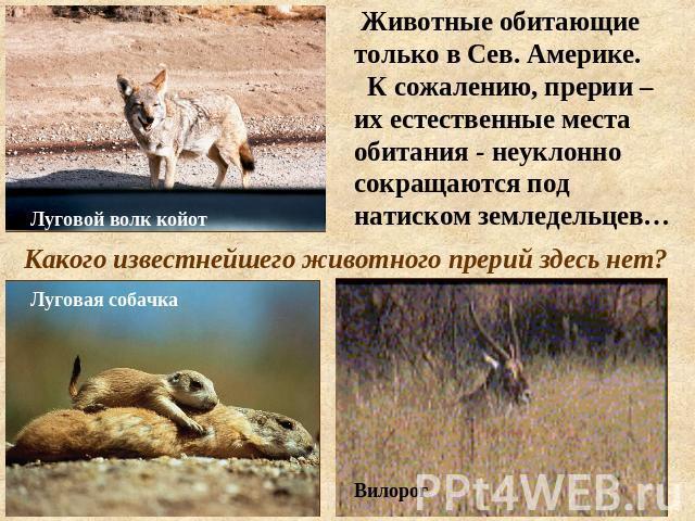 Почему млекопитающие обитающие в северных широтах
