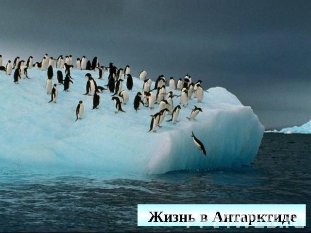 Скачать видео обитатели антарктиды фото 496-357