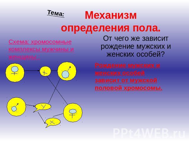 Механизм определения пола.