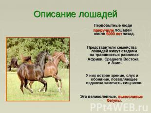 Описание лошадей первобытные люди