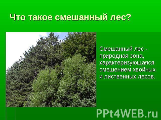 Что такое смешанный лес?