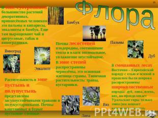 ФлораВ зоне субтропиков квалифицированная растений декоративных, привнесённых человеко