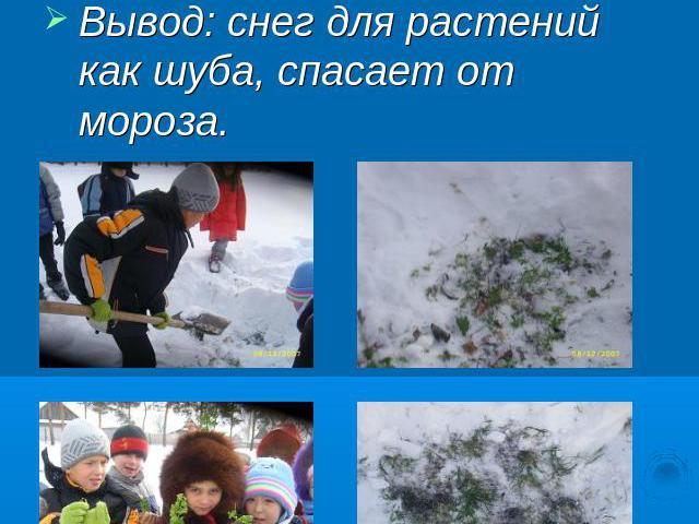 Почему растения не погибают зимой от морозов