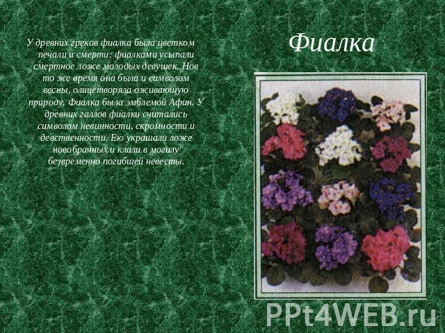 """Презентация """"Комнатные растения-друзья и враги"""" - скачать презентации по Экологии"""