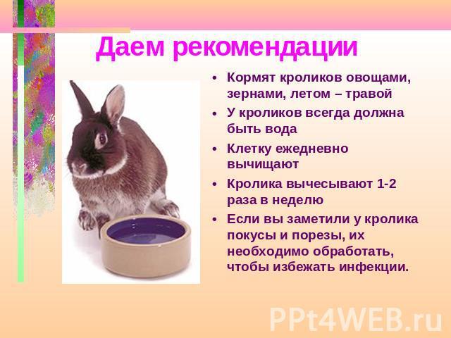 Условия чем кормить кроликов домашних