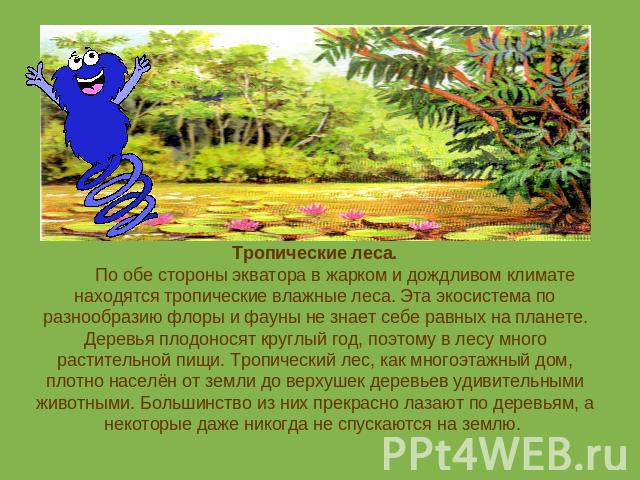 растения влажного тропического леса фото и названия