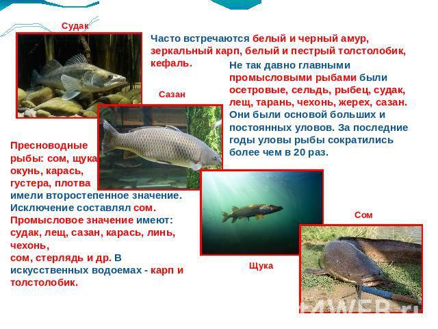 рыболовы реферат