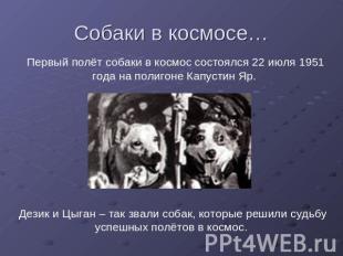 Презентация собаки на тему животные