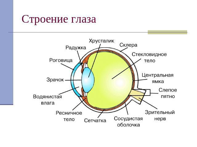 Презентация На Тему Глаз Как Оптическая Система Физика 8 Класс