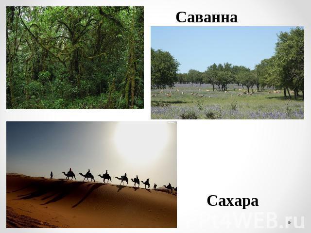Презентация на Тему Леса Умеренного Пояса