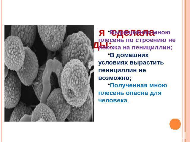Как сделать антибиотик в домашних условиях - Arturdina.ru