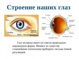 Строение наших глаз глаз человека