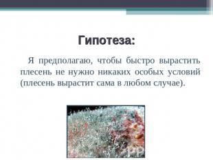 Тему на плесень презентация