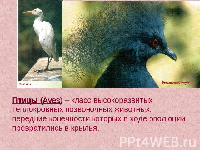 Птицы aves – класс высокоразвитых