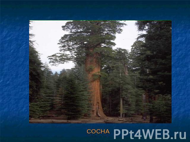 Лес И Человек Презентация