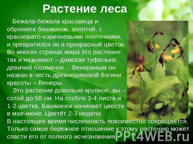 Растение леса бежала бежала красавица