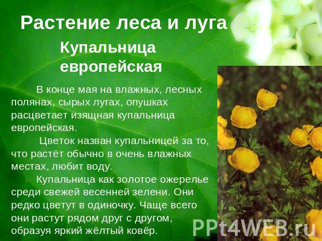 Растение леса и лугакупальница