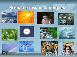 Объекты живой и неживой природы