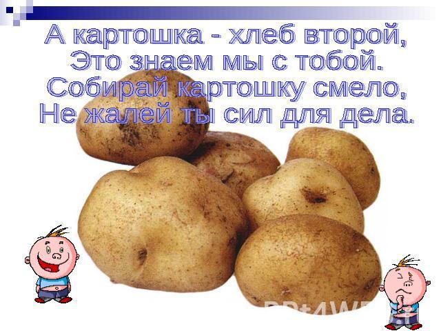Открытка про картошку