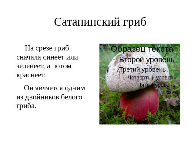 если на срезе гриб синеет на срезе фото