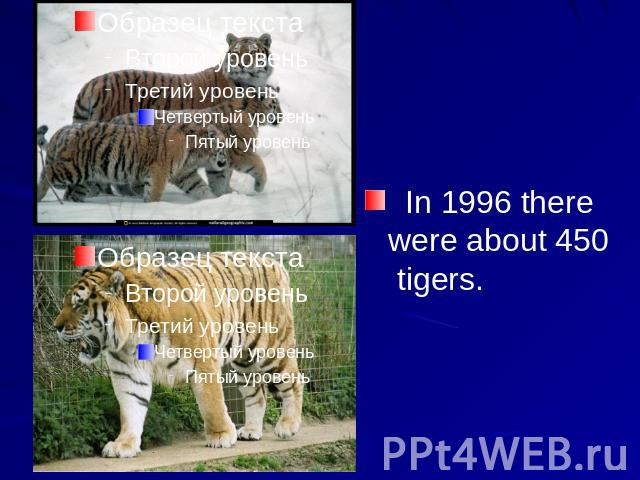 essay about on project tiger Project tiger kanha at the beginning of 19th century, there are about 40000 tigers  spread throughout in india till 1972, their population depleted sharply to 1800.