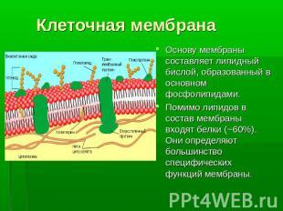 знакомство с клеткой презентация