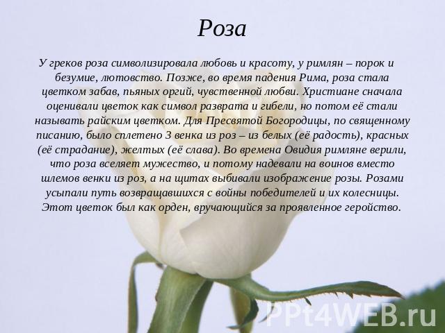 Цветка розы описание
