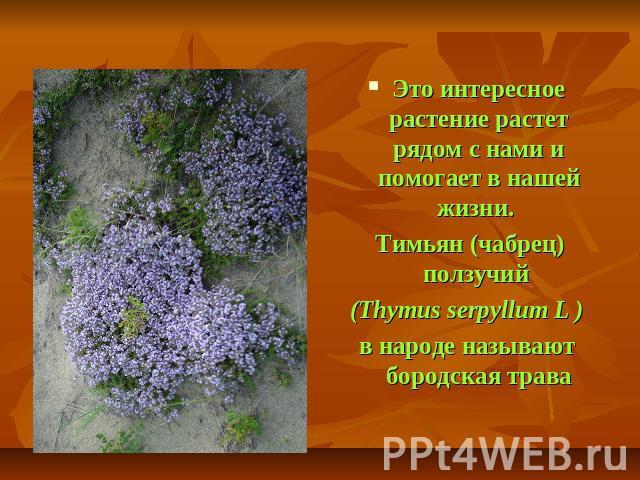 Лекарственные Растения Презентация 2 Класс