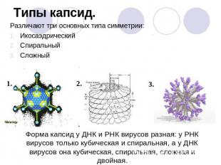 Химический состав вирусов