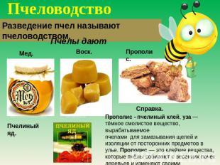 Пчеловодство Разведение пчел называют пчеловодством. Пчелы дают Справка. Прополи