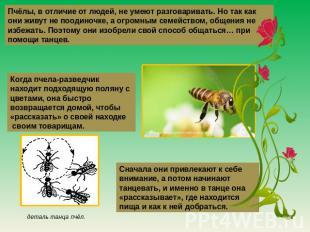 Пчёлы, во различие ото людей, отнюдь не умеют разговаривать. Но приблизительно во вкусе они живут малограмотный пооди