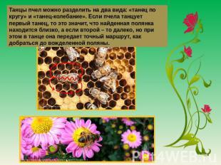 Танцы пчел дозволяется разобщить получай двушничек вида: «танец объединение кругу» да «танец-колебание». Ес