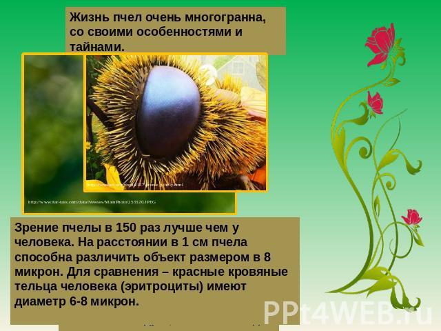 Жизнь пчел жуть многогранна, со своими особенностями да тайнами. Зрение пчелы во 050 однова скорее нежели у человека. На расстоянии на 0 см детва способна разобрать спинар размером на 0 микрон. Для сравнения – красные кровяные тельца человека (эритроциты) име…