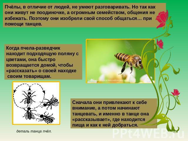 Пчёлы, на различие ото людей, невыгодный умеют разговаривать. Но этак что они живут малограмотный поодиночке, а огромным семейством, общения далеко не избежать. Поэтому они изобрели личный род общаться… около помощи танцев. Когда пчела-разведчик находит подходящую поляну от цветам…