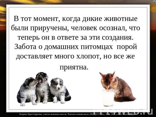 Стих про заботу о животных