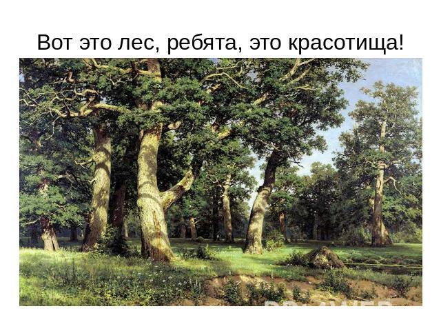 Скачать презентацию на тему загрязнение леса