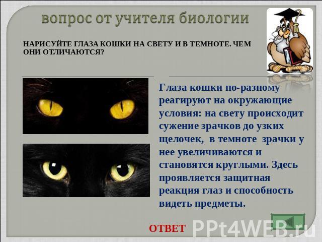 Почему в темноте один глаз видит хуже другого