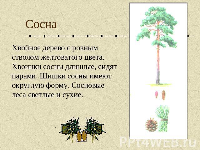 Как сделать хвойное дерево 488