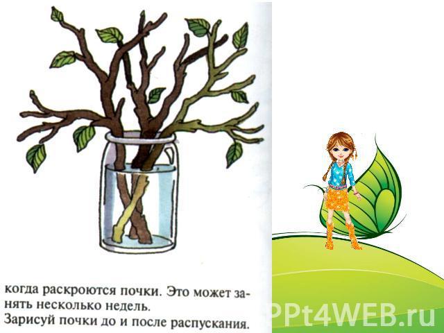 Презентация На Тему Деревья Для Дошкольников