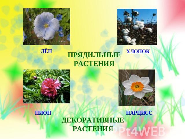 реферат дикорастущие растения