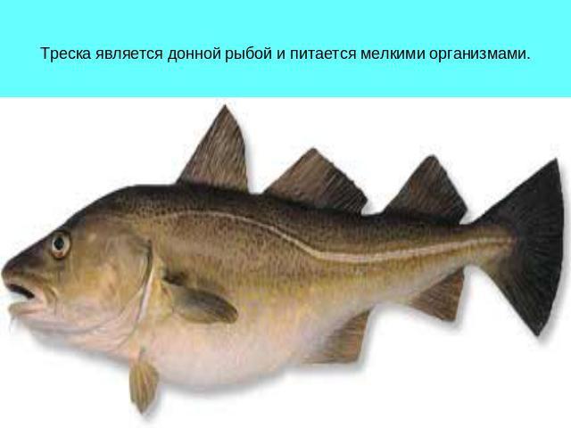 какие рыбы морские а какие речные