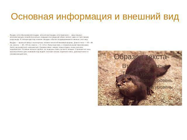 Растительность Татарстана  Сайт посвященный туризму и
